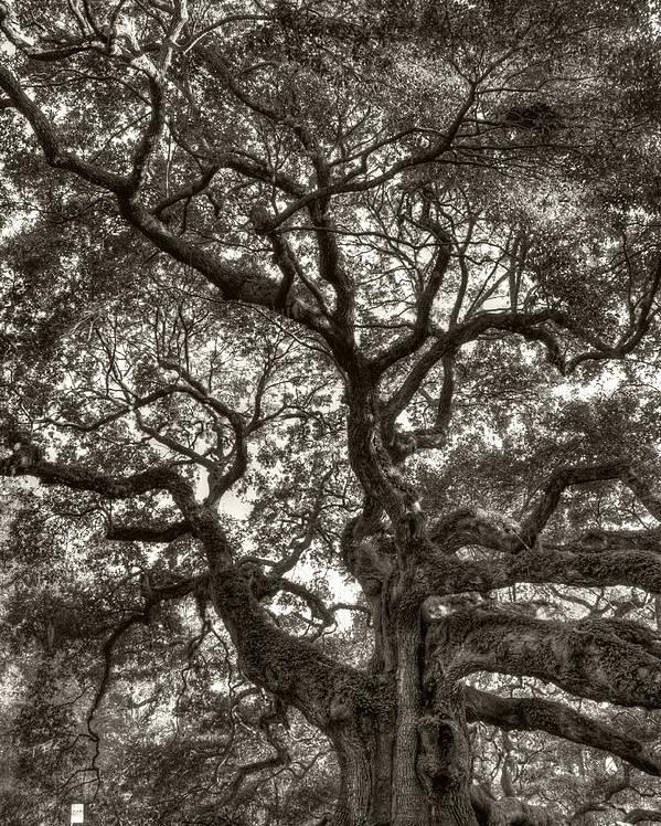 Angel Oak Poster featuring the photograph Angel Oak Live Oak Tree by Dustin K Ryan