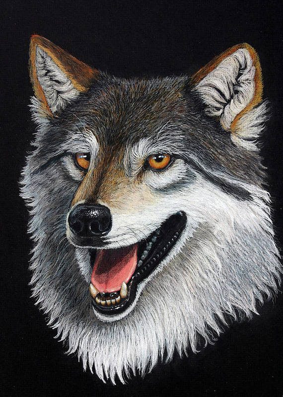Animal Poster featuring the mixed media A Friendly Wolf by Lorraine Foster