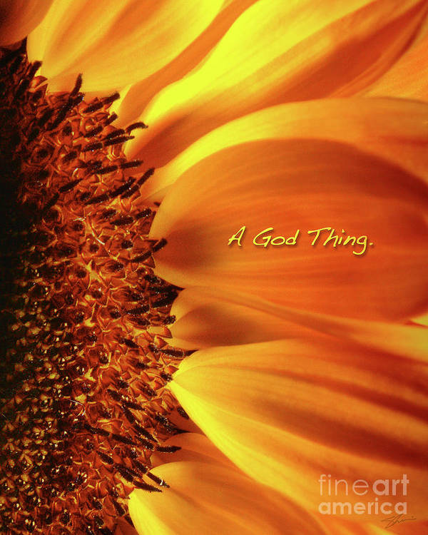 Sun Flowers Poster featuring the photograph A God Thing-2 by Shevon Johnson