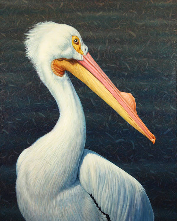 Pelican Poster featuring the painting A Great White American Pelican by James W Johnson