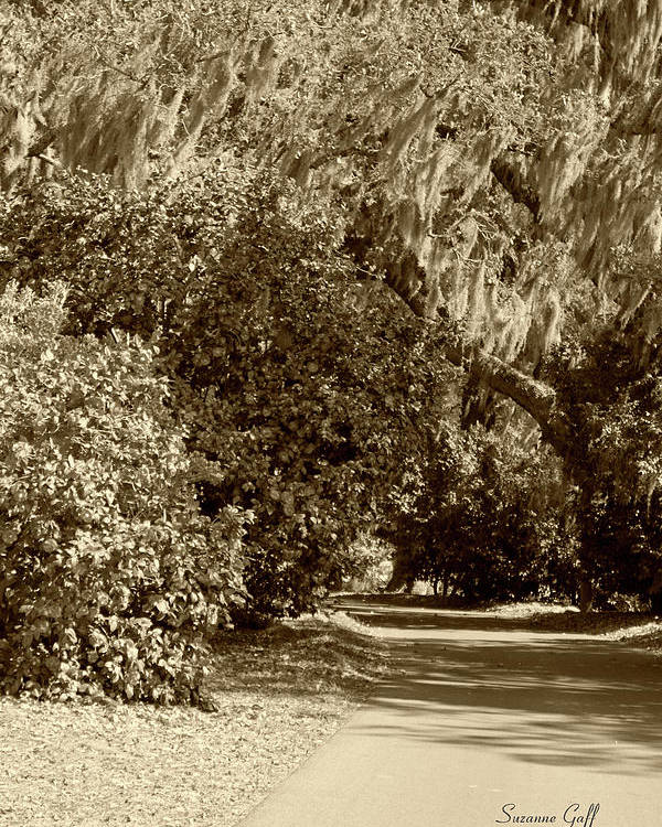 Sepia Poster featuring the photograph A Lowcountry Springtime by Suzanne Gaff