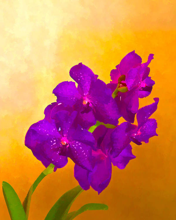 Flower Poster featuring the mixed media A Study In Orchid by Ches Black