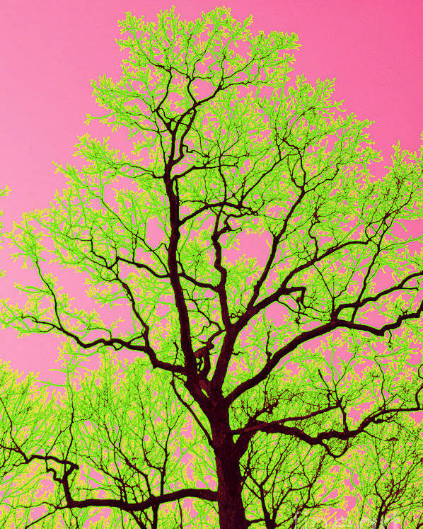 Lime Green Poster featuring the photograph A Tree Grows In Vegas by Valerie Fuqua