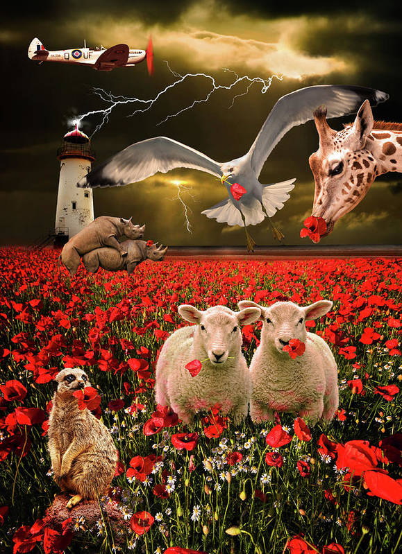 Sheep Poster featuring the photograph A Very Strange Dream by Meirion Matthias