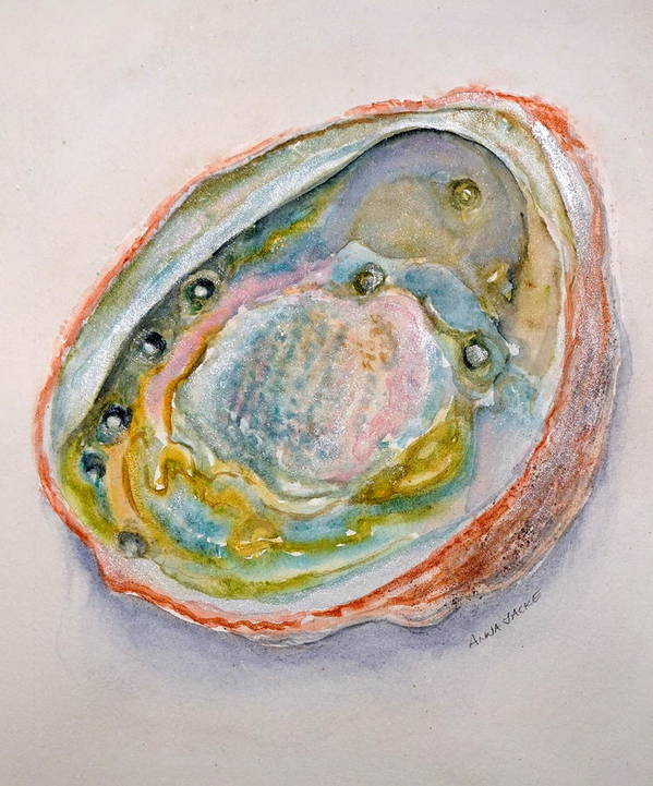 Abalone Shells Poster featuring the painting Abalone Study #2 by Anna Jacke