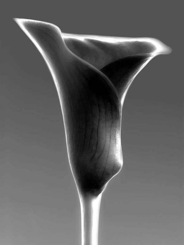 All Poster featuring the photograph Abstract Calla Flower by Artecco Fine Art Photography