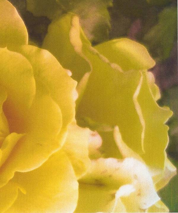 Floral Photography Poster featuring the photograph Abstract Yellow Rose by Adrianne Wood