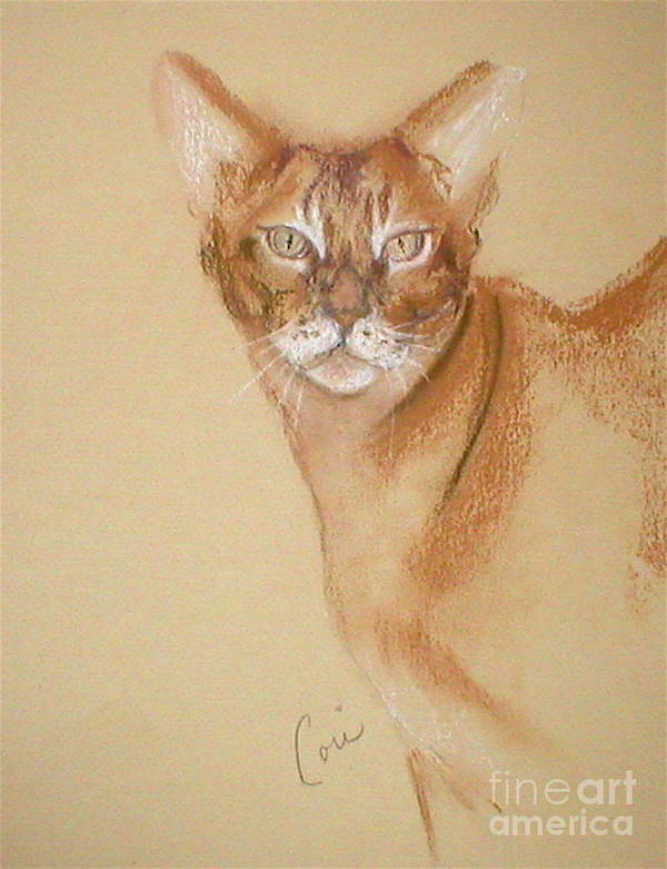 Pastel Poster featuring the drawing Abyssinian by Cori Solomon