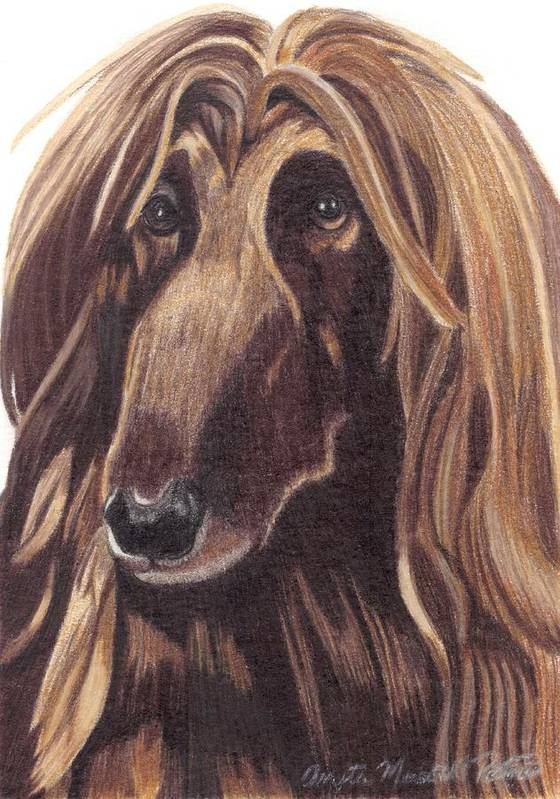 Dog Poster featuring the drawing Afghan Hound Vignette by Anita Putman
