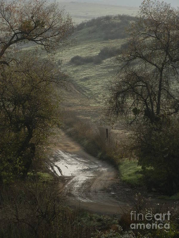 Country Road Poster featuring the photograph After The Rain by Robert Ball