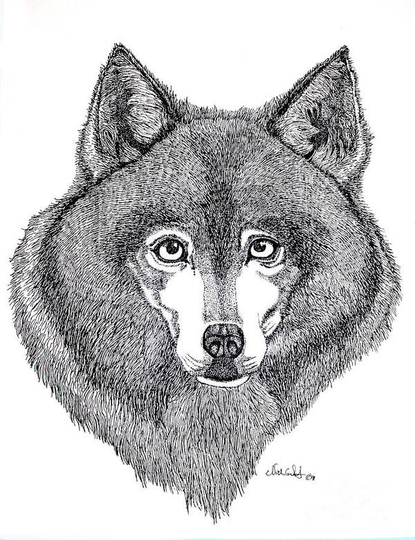 Dog Poster featuring the drawing Alaskan Husky by Nick Gustafson