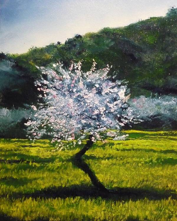 Almond Tree Poster featuring the painting Almond Tree In Blossom by Lizzy Forrester