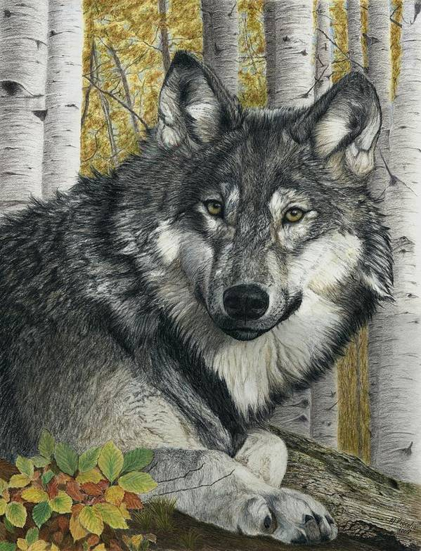 Wolf Poster featuring the painting Alpha Male by Marlene Piccolin