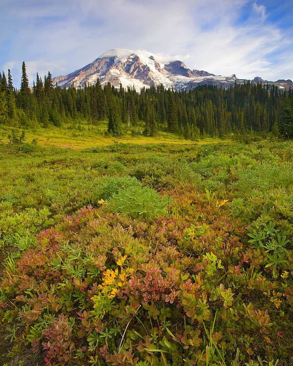 Mt. Rainier Poster featuring the photograph Alpine Meadows by Mike Dawson
