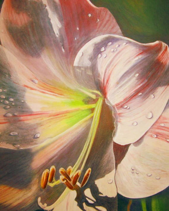 Flowers Poster featuring the painting Amarylis by Tara Milliken