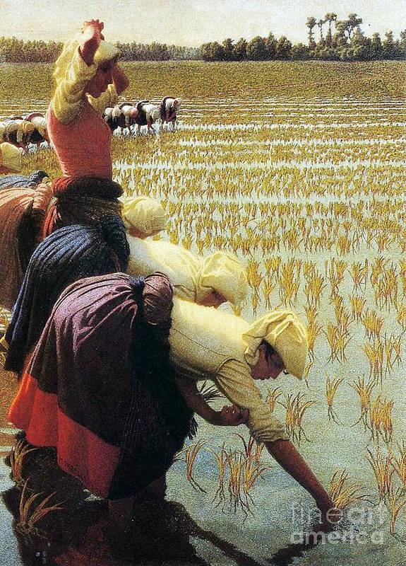 Italian Poster featuring the painting An Italian Rice Field by Angelo Morbelli