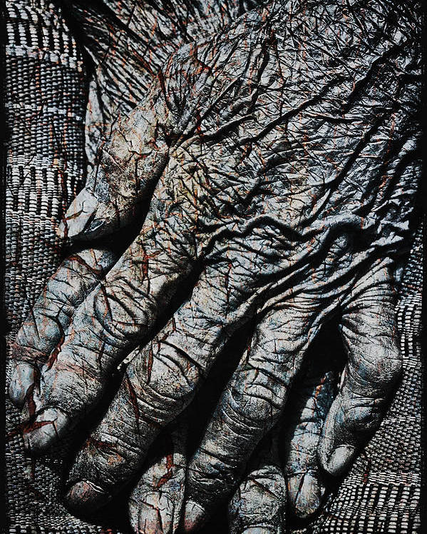 80-90 Yrs Poster featuring the photograph Ancient Hands by Skip Nall