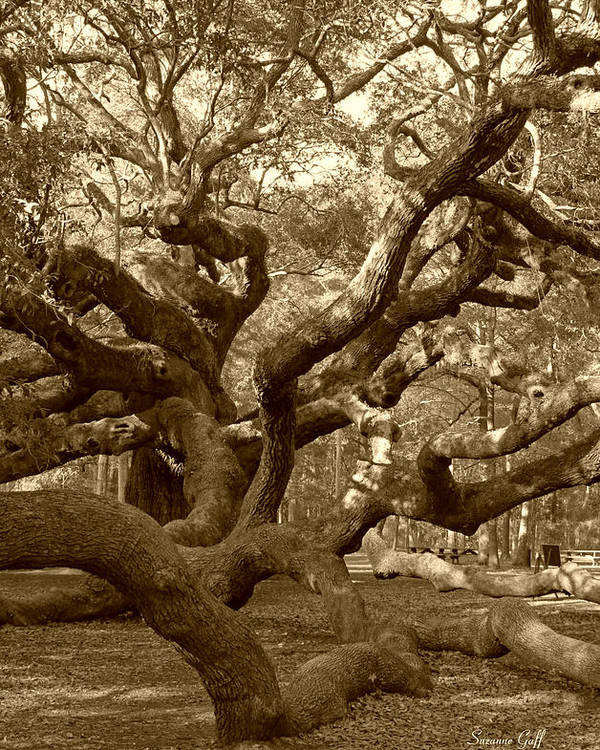 Sepia Poster featuring the photograph Angel Oak In Sepia by Suzanne Gaff