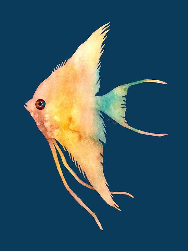 Fish Poster featuring the painting Angelfish II - solid background by Hailey E Herrera