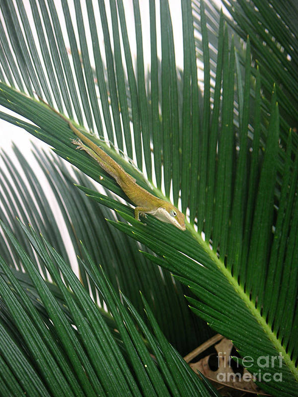 Nature Poster featuring the photograph Anole With Palm - Inquisitive by Lucyna A M Green