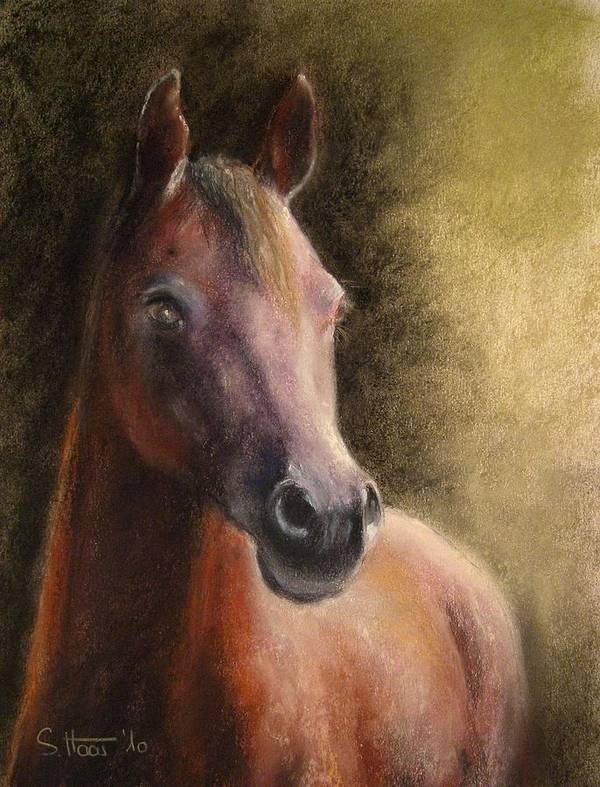 Horse Poster featuring the painting Arabian Horse by Sabina Haas