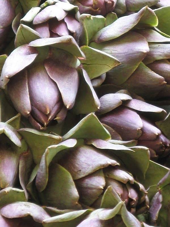 Sant'erasmo Poster featuring the photograph Artichokes by Erla Zwingle