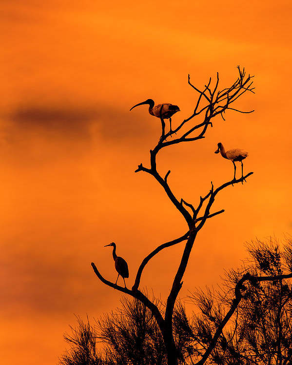 Birds Poster featuring the photograph At rest by Sheila Smart Fine Art Photography