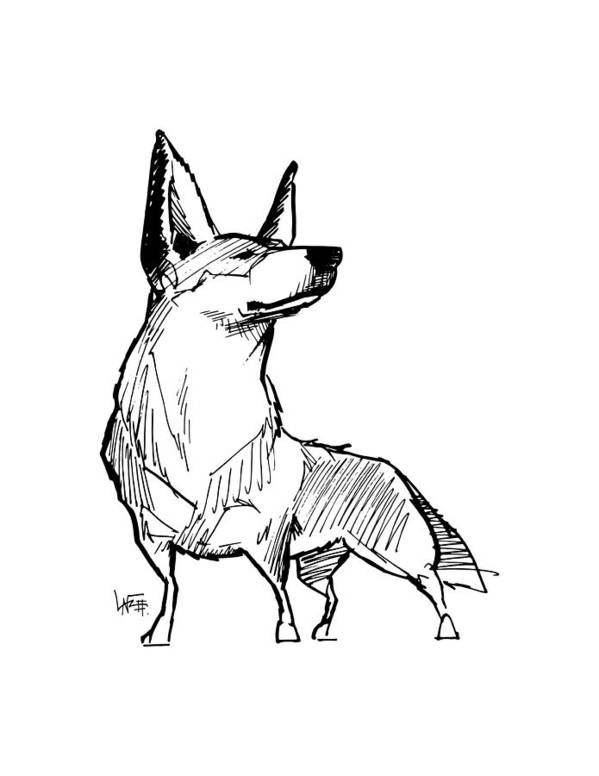 Australian Cattle Dog Gesture Sketch Poster By John Lafree