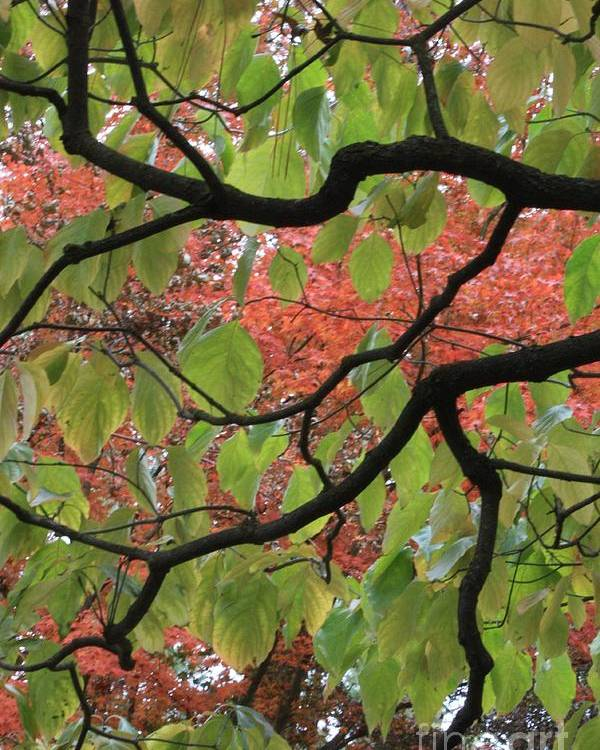Fall Poster featuring the photograph Autumn 7 by Carol Groenen
