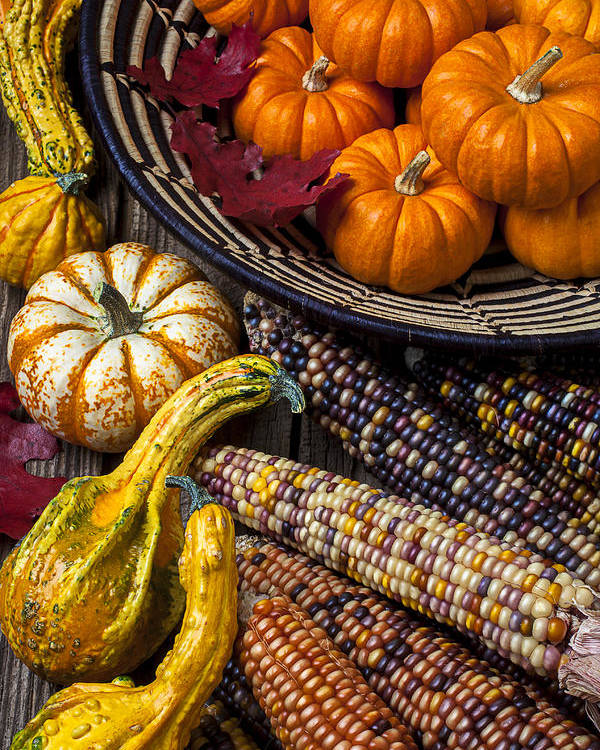 Gourd Poster featuring the photograph Autumn Abundance by Garry Gay
