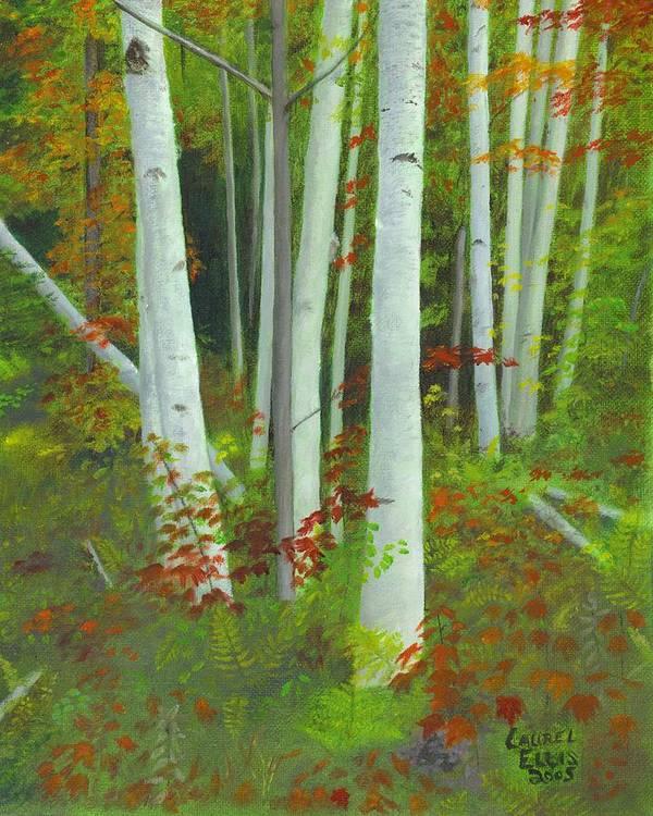 Landscape Poster featuring the painting Autumn Birches by Laurel Ellis