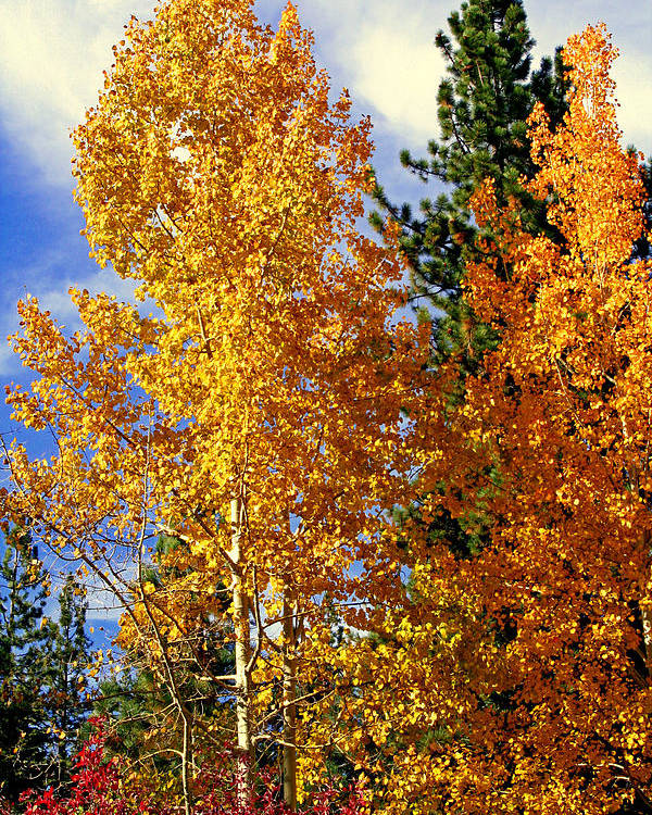 Autumn Colors Poster featuring the photograph Autumn Colors by Lynn Bawden