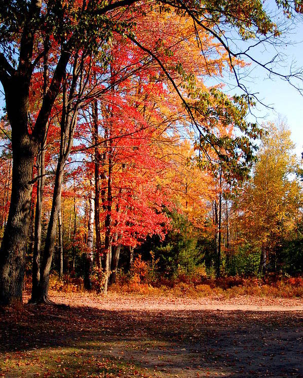 Trees Poster featuring the photograph Autumn Flame by Jennifer Englehardt