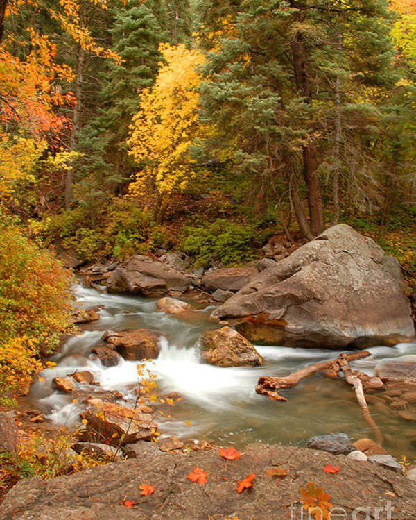 Autumn Poster featuring the photograph Autumn In Alpine Loop by Dennis Hammer