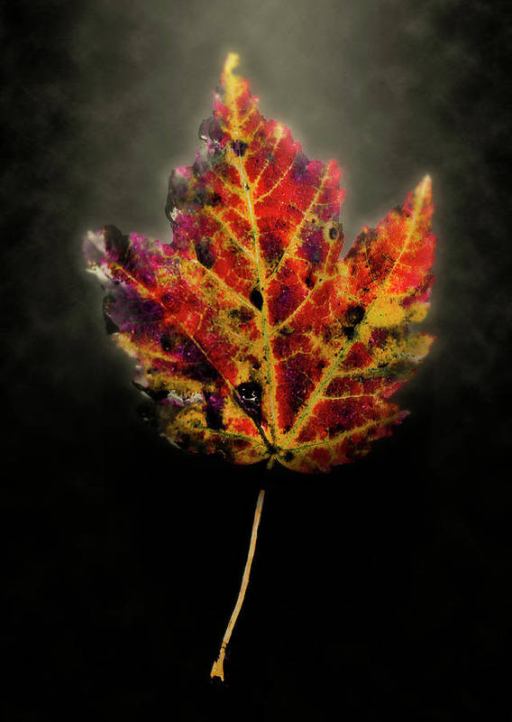 Leaf Poster featuring the photograph Autumn by Jim Painter