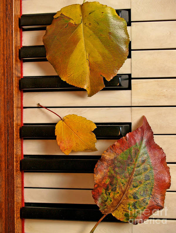 Piano Poster featuring the photograph Autumn Leaf Trio On Piano by Anna Lisa Yoder