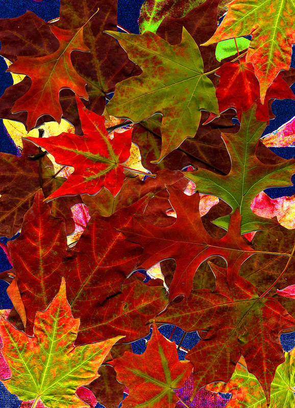 Collage Poster featuring the photograph Autumn Leaves by Nancy Mueller