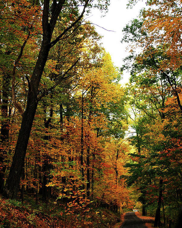 Autumn Poster featuring the photograph Autumn Path by Lori Tambakis