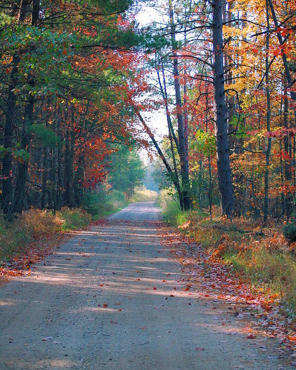 Autumn Poster featuring the photograph Autumn Road by Jennifer Englehardt