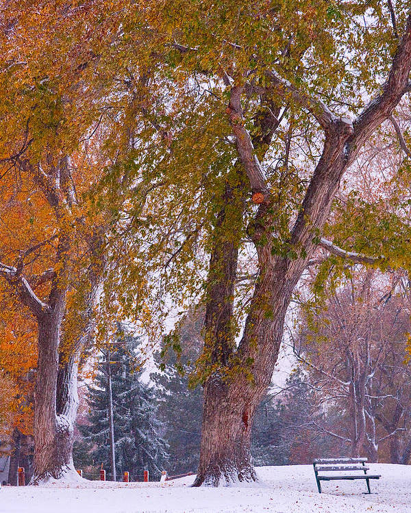 First Snow Poster featuring the photograph Autumn Snow Park Bench  by James BO Insogna