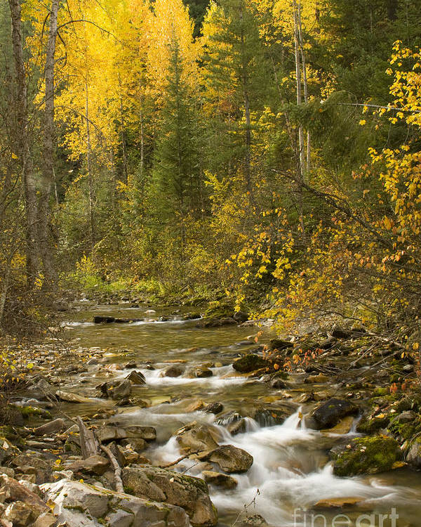 Idaho Poster featuring the photograph Autumn Stream by Idaho Scenic Images Linda Lantzy