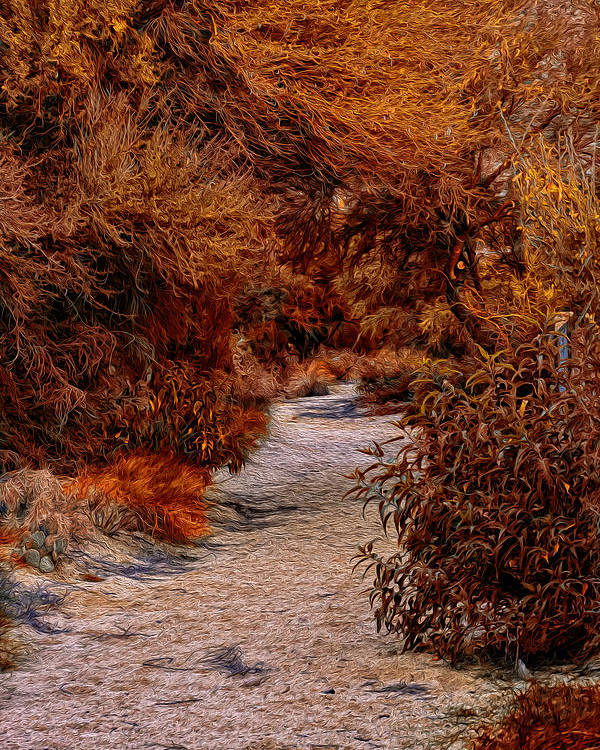 Oro Valley Poster featuring the photograph Autumn Stroll No23 by Mark Myhaver