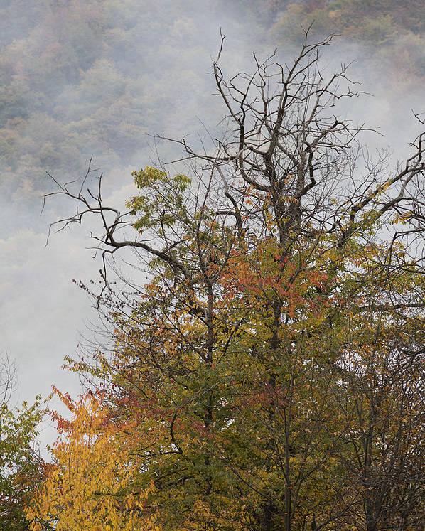 Autumn Poster featuring the photograph Autumn3 by Luigi Barbano BARBANO LLC