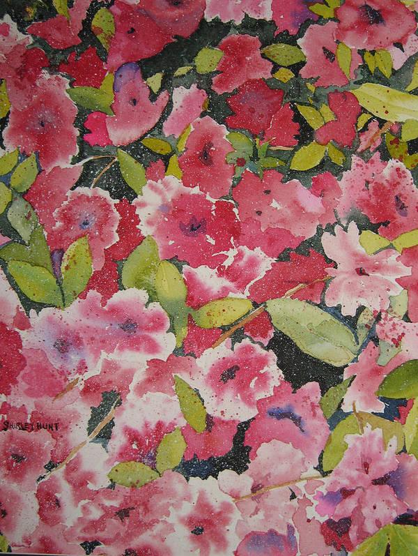 Botanical Poster featuring the painting Azalea Medley by Shirley Braithwaite Hunt