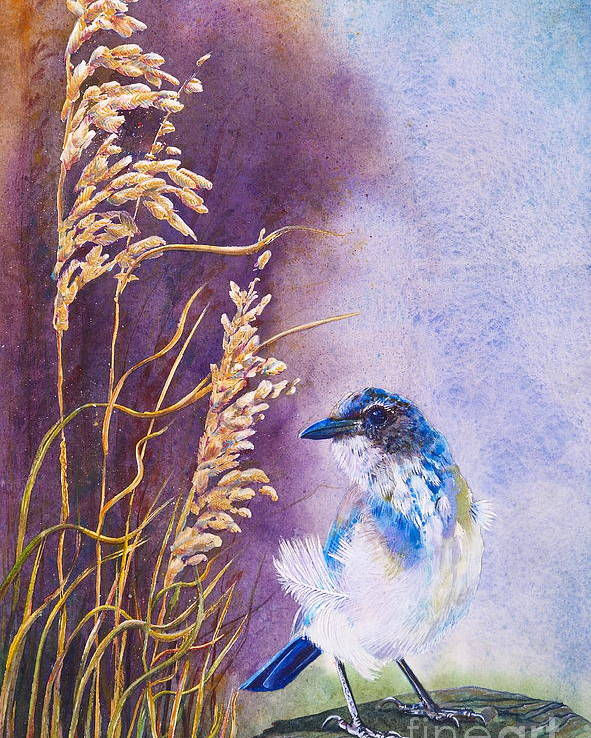 Scrub Jay Poster featuring the painting Bad Feather Day by Jany Schindler