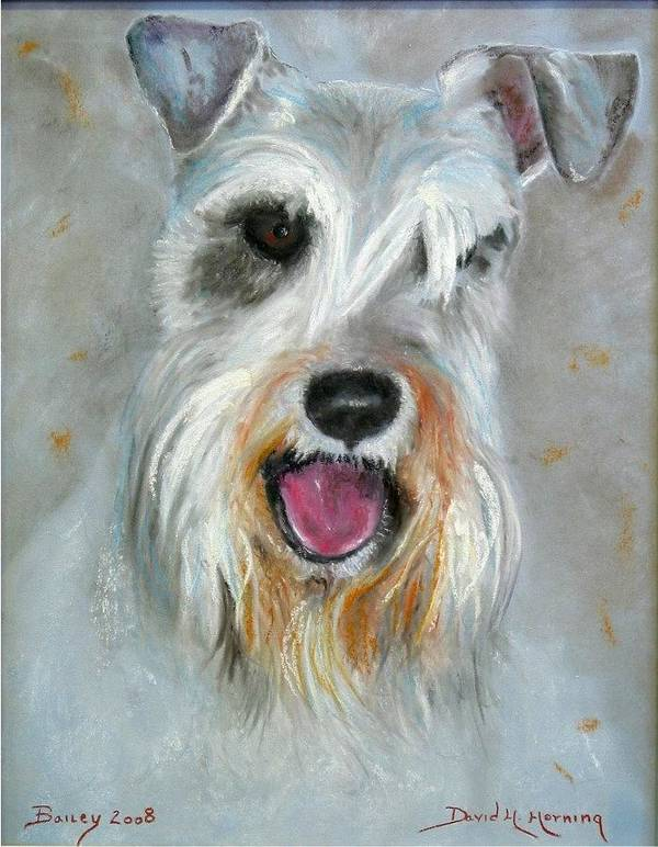 Schnauzer Poster featuring the painting Bailey by David Horning