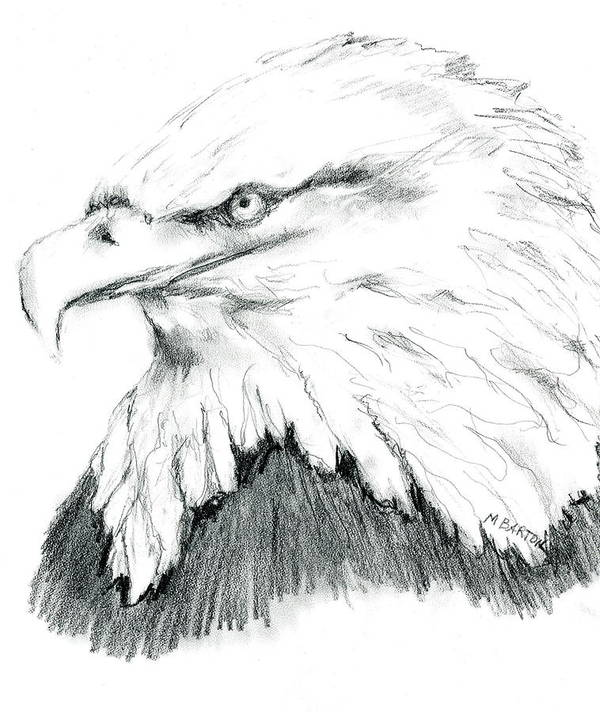 Eagle Poster featuring the drawing Bald Eagle by Marilyn Barton