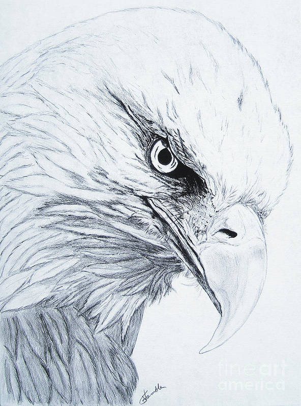 Pencil Drawing Poster featuring the drawing Bald Eagle by Nancy Rucker