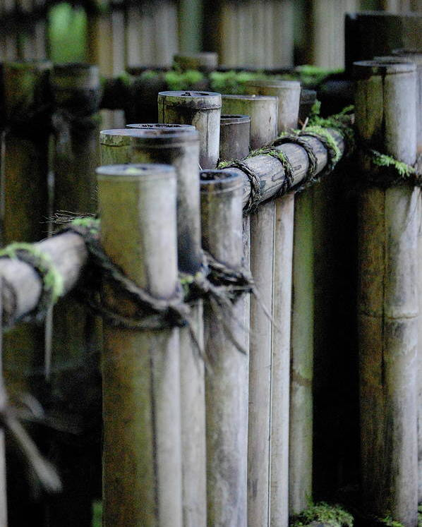 Bamboo Poster featuring the photograph Bamboo Fence by Samantha Kimble