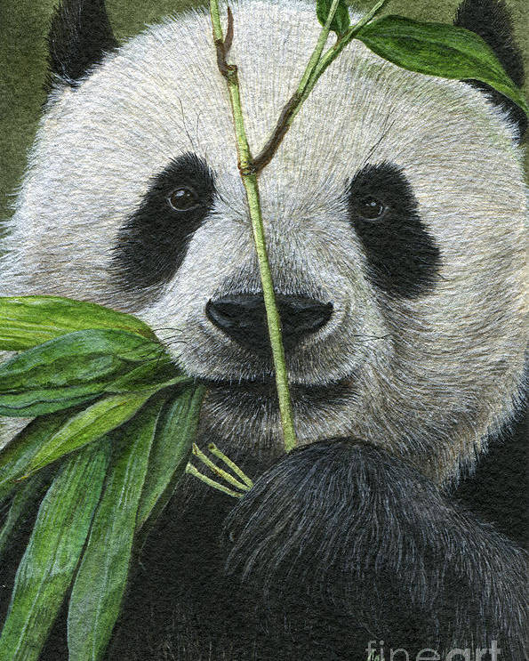 Panda Poster featuring the painting Bamboo Foodie by Morgane Antoine